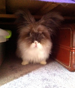 Somebunny's Under the Bed